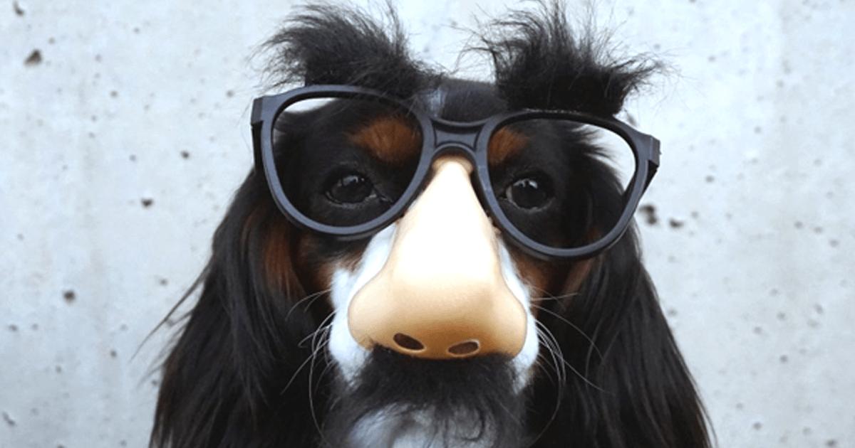 Pivot_puppy